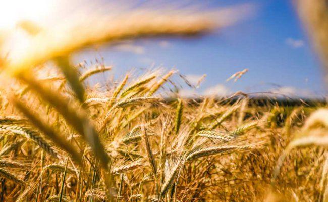 Vente et livraison de sels pour l'agriculture